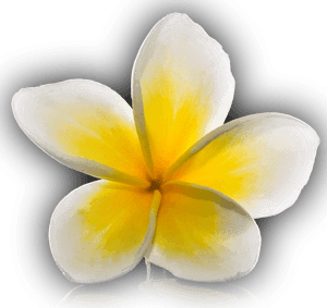 Frangipani moon ritual ReVive Petersfield